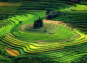 Terraced rice fields in Y  linh Ho village